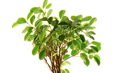 Enfermer en quarantaine à la maison? Pas de soucis, les plantes sont à votre rescousse!
