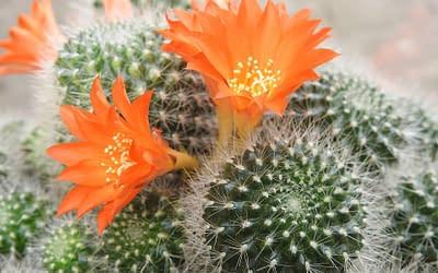 Vous voulez du piquant dans votre vie? Adopter un cactus!