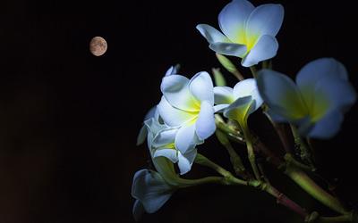 Jardiner avec la lune, mythe ou réalité?